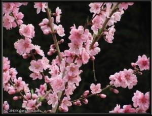 April12th_Takamizu3Mtns225_PeachRC