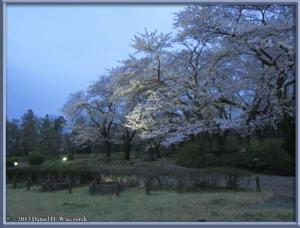 Mar31_04_JindaiBG_Hanami_LightsRC