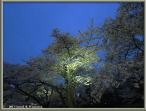 Mar31_20_JindaiBG_Hanami_LightsRC