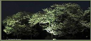 Mar31_30_31_32_Panorama_JindaiBG_Hanami_LightsRC