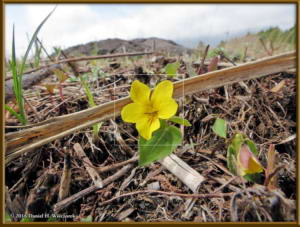 Apr18_03_BoundaryBusStopArea_Viola_orientalisRC