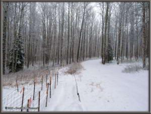 Apr19_2_SnowStormRC