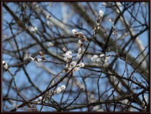 April8th_007_WillowRC