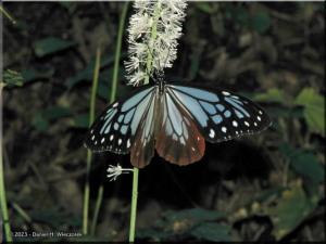 Oct28_Takao_Butterfly16aRC.jpg