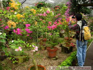 Oct22_017_GoraArea_Bougainvillea_RC