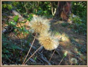 Oct28_ICChoDaira_27_SeedheadRC