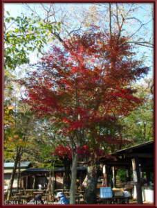 Oct28_Kobotoke_44_KobotokeSummitColorsRC