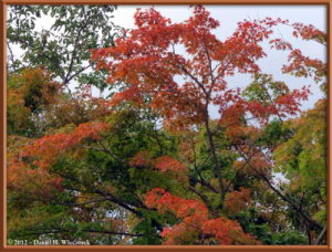 Oct12_1ATS_MtTakao_FallColorRC