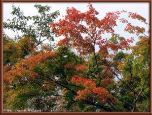 Oct12_2ATS_MtTakao_FallColorRC