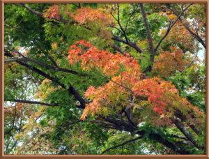 Oct12_3ATS_MtTakao_FallColorRC