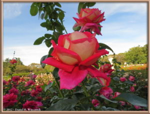 Oct13_49_JindaiBG_RoseGardenRC