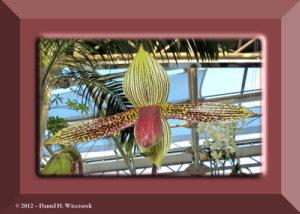 Oct13_71_JindaiBG_OrchidDisplayRC