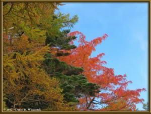 Oct20_029_MtFuji5thStationArea_FallColorRC