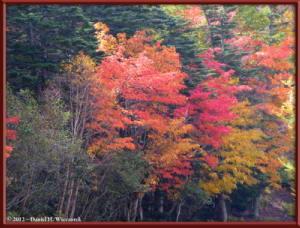 Oct20_139_MtFuji5thSta_3rdSta_Scenery_FallColorRC