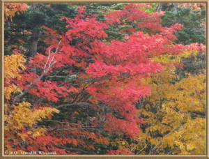 Oct20_155_MtFuji5thSta_3rdSta_Scenery_FallColorRC