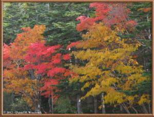 Oct20_158_MtFuji5thSta_3rdSta_Scenery_FallColorRC