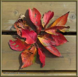 Oct24_17_JindaiBotGarden_ColorLeavesRC