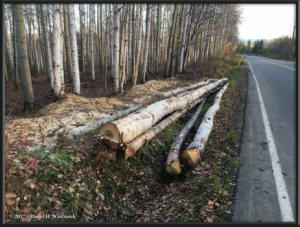 Oct1_1_FirewoodLogsRC