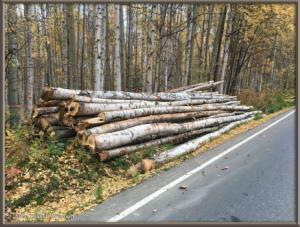Sept18_2_FirewoodLogsRC