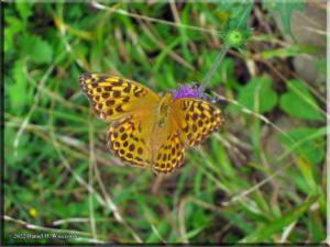 TakaoSan10_Butterfly02RC.jpg