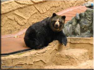 TamaZoolPark09_BearRC.jpg