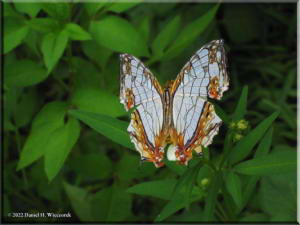 TamaZoolPark14_ButterflyRC.jpg