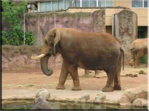 TamaZoolPark18_ElephantRC.jpg