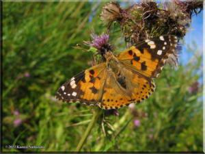 MtMyoujin_Butterfly09RC.jpg