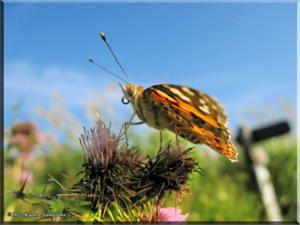 MtMyoujin_Butterfly15RC.jpg