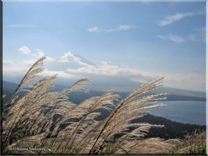 MtMyoujin_MtFuji_Grass02RC.jpg