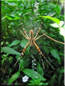 Sep02_Nogawa_Spider01RC.jpg