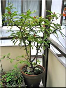 Porch_San_Shou01aCropRC.jpg