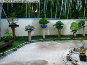 Sep15_ShowaKinen_JapaneseGarden19_BonsaiRC.jpg