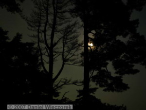 Sep22_ICchoDaira_MoonThroughTrees01RC.jpg