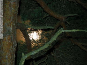 Sep22_ICchoDaira_MoonThroughTrees06RC.jpg