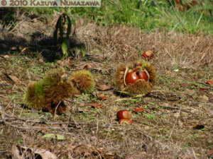 Sept26th_Kinchakuda012RC