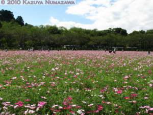 Sept26th_Kinchakuda151RRC