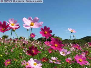 Sept26th_Kinchakuda156RC