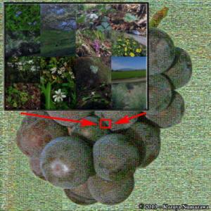 Sept7th_Katsunuma014CropAnnotated_Grapes_MosaicRC