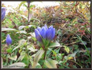 Sep20_181_MtAkitaKomagatake_MoominValley_PlantsRC