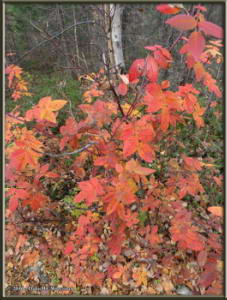 Sep18_16_AngelRocks_AutumnColorsRC