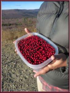 Sep9_67_USCreekRoad_Mile4_5_LingonberriesRC