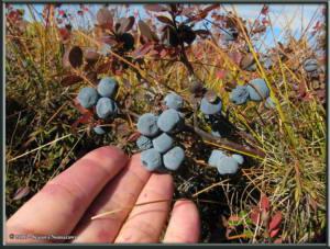 Sept8th_107_SteeseHWY_BlueberryRC