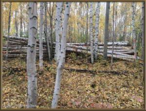 Sept18_1_FirewoodLogsRC