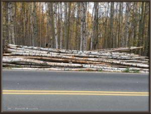Sept18_3_FirewoodLogsRC
