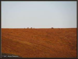 Sept3rd_004_EagleSummit_CaribouRC