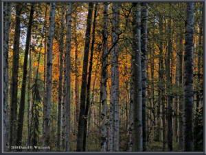 Sept11_4SIP_AtHome_AutumnRC