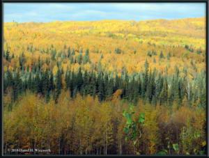 Sept17_008_ChenaHotSpringsRoad_AutumnColorRC