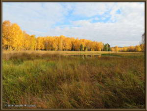 Sept17_013_ChenaHotSpringsRoad_AutumnColorRC