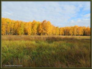 Sept17_014_ChenaHotSpringsRoad_AutumnColorRC